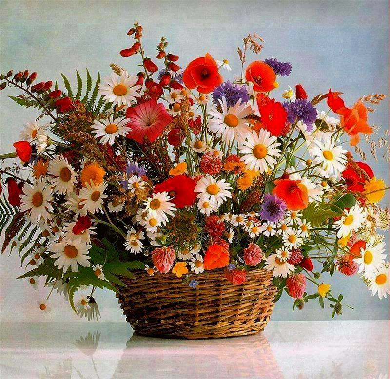 Lule dhe vetëm lule! - Faqe 2 J8krNfYPxZGT1M_xuS4aB_yZDu75lCEaOghVkmta4NYeTo8_Tb0wUw==