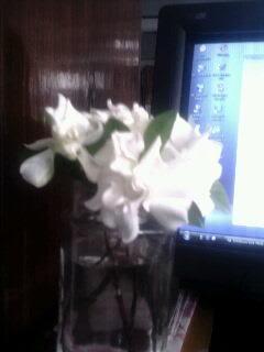 ดอกพุทธซ้อน