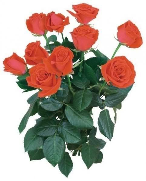 Lule dhe vetëm lule! YiM3gW7oAdUuPz5m_K6vkdb0q1yumC98uYu8zVp_GqDZGpZkIuDE2Q==