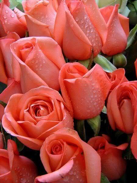 Lule dhe vetëm lule! Bv3wRALu-oU6pa-B2aJMLHjfHJAJQEucJeDQRWtH4CiDu0hcsIIKXA==